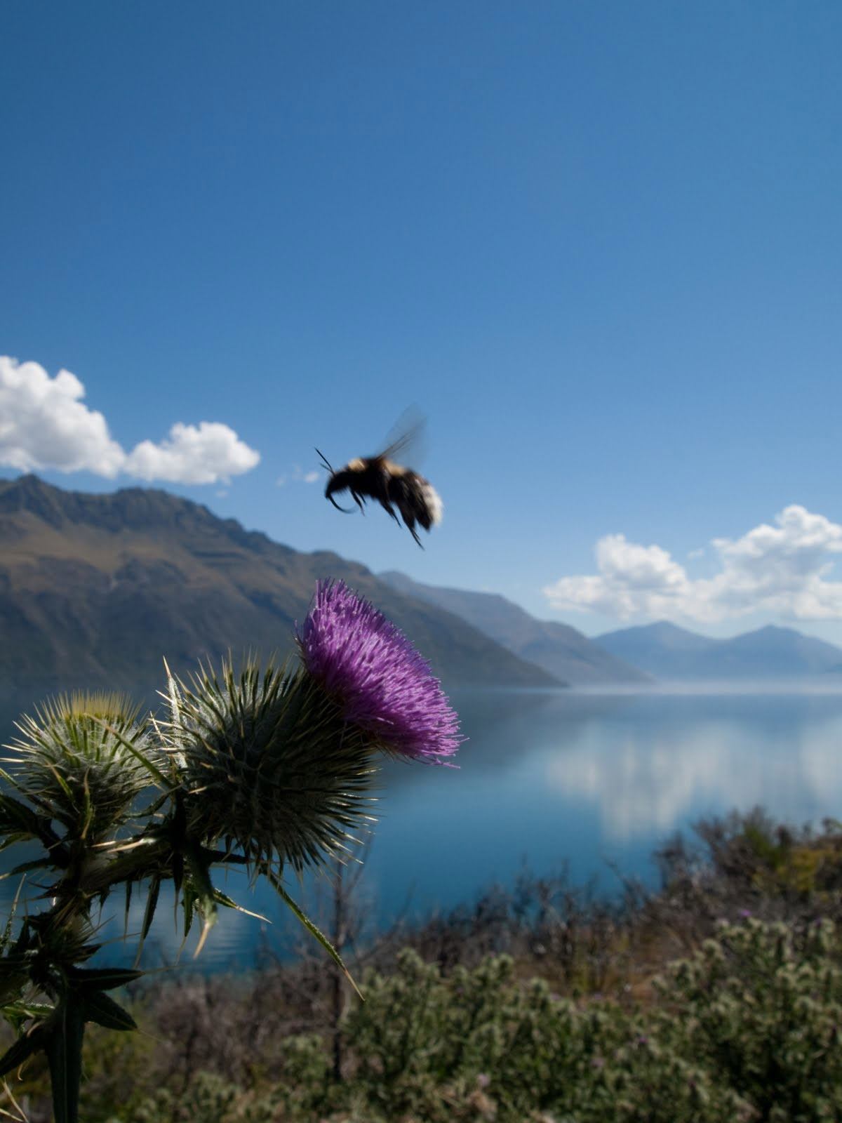 New Zealand South Island - Lake and bee