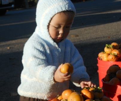 Littlest persimmon picker