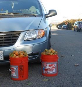 persimmon buckets car