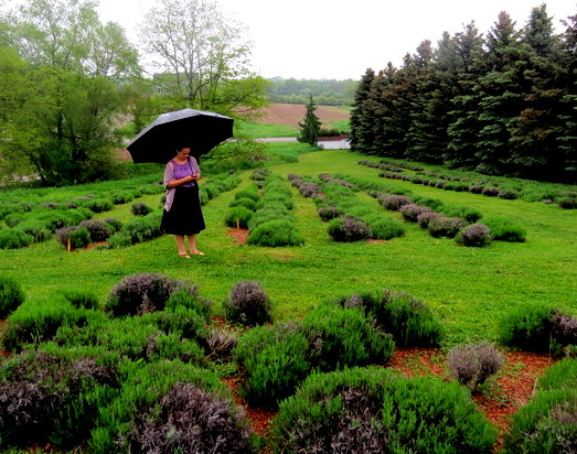 Well being, green space and lavender farms