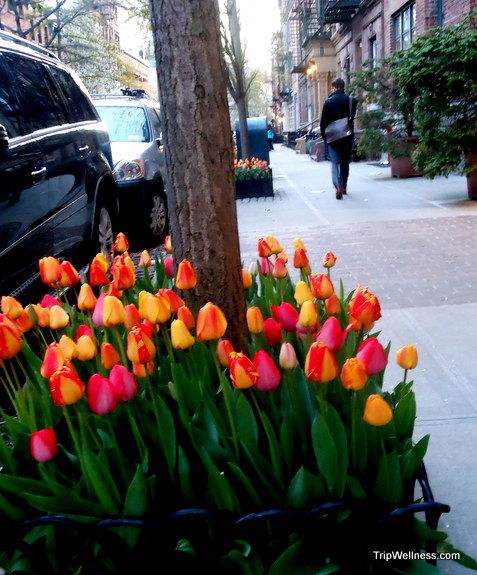 springtime tulips new york, trip wellness, walking tours in new york