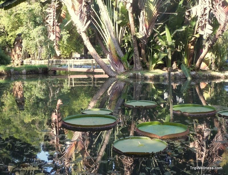 Pond in Jardim Botanico