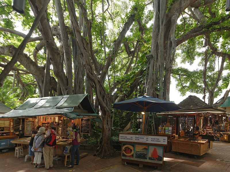 Giant Banyan Tree over the new Honolulu International Marketplace