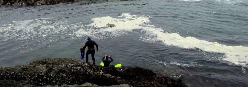 Free diving for wild Abalone near Mendocino, tripwellness