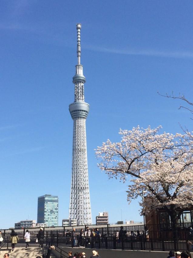 tokyo sky tree with cherry blossoms, trip wellness