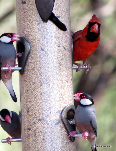 Birds at the Four Seasons Lanai