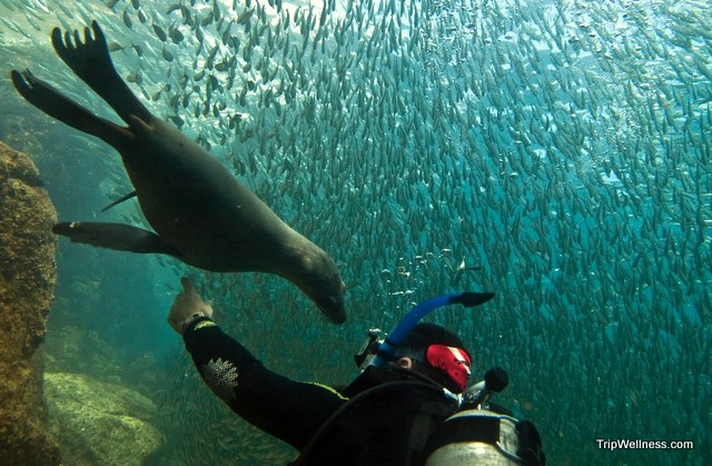 World of Transitions: Scuba diving in La Paz, Mexico