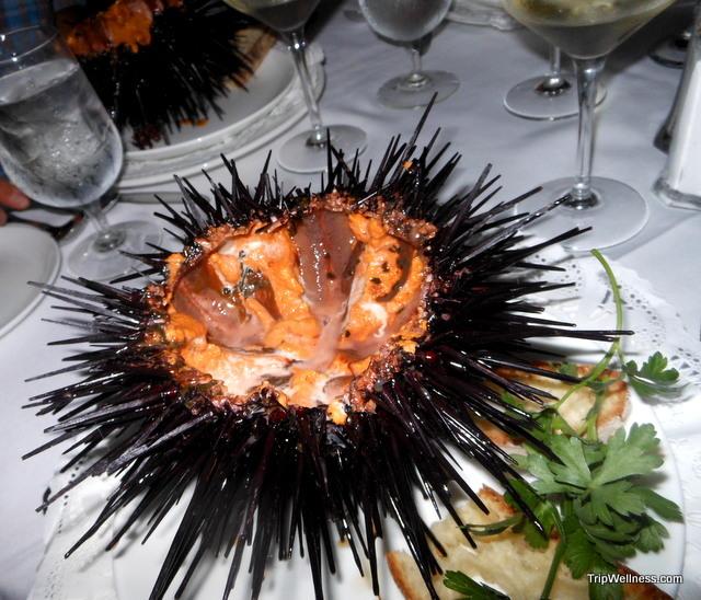sea urchin plate baci