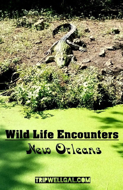 wild life encounters new orleans