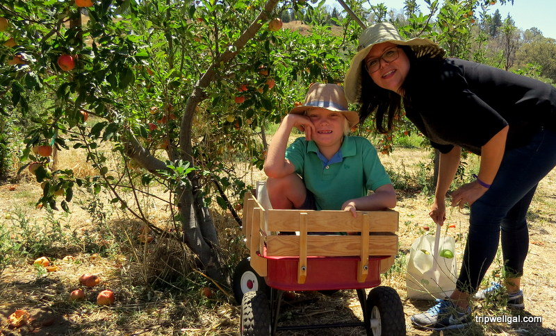 Apple picking in Julian – A San Diego day trip