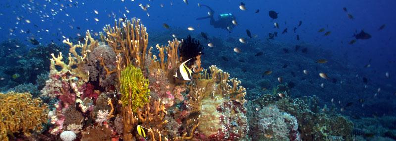 UNESCO World Heritage site, Tubbatha Reef
