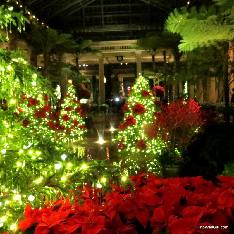 Poinsettia display inside the Longwood Gardens conservatory.