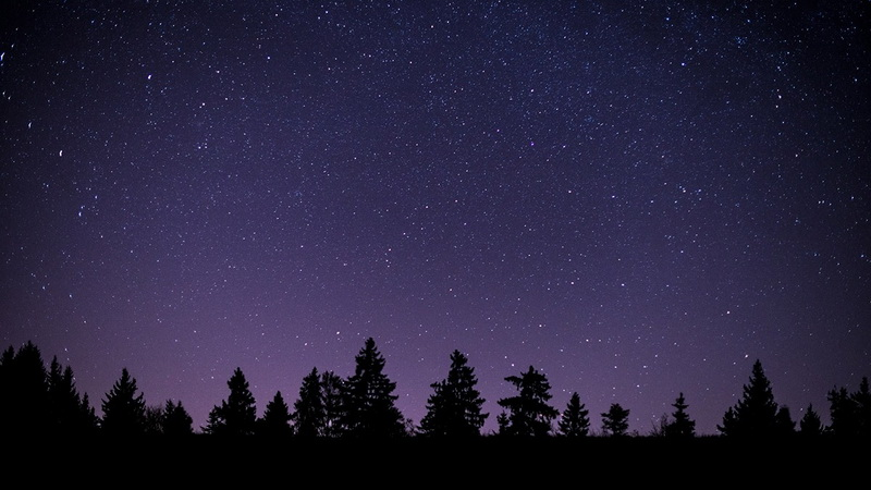 night sledding view of tree tops with Outdoor Interlaken