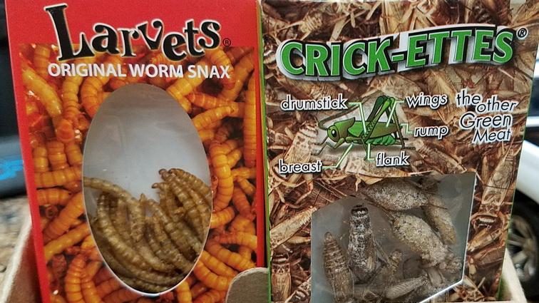 larva and cricket snacks