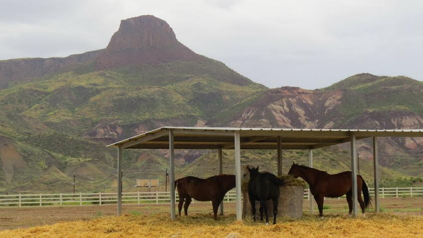 horses in Lajitas stables