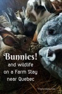 Bunnies and wildlife encounters on a farm vacation