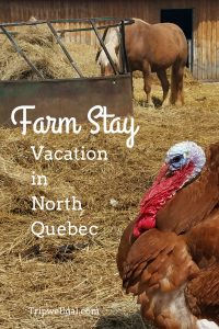 Ready for a Farm Vacation? Meet barnyard animals, wolves and bison at Ferme 5 Etoile farm.