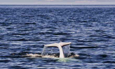 Tadoussac Quebecwhale watching, indigenous cuisineand village life par excellence