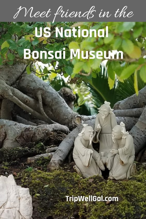 Bonsail Museum at the US Arboretum near Washington DC