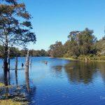 Alligators, Airboats, and Acadians – Explore the rich waters of Atchafalaya Basin, Louisiana