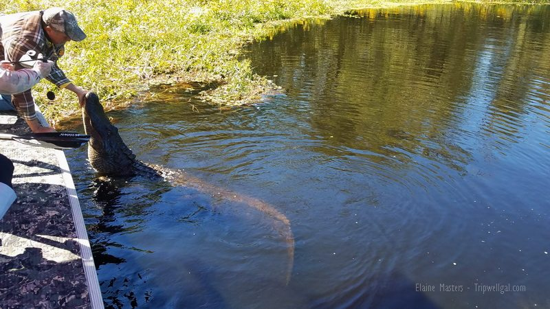 Bayou Bromance - Captain Tucker and Hercules, an alpha male alligator in the Atchafalaya Basin