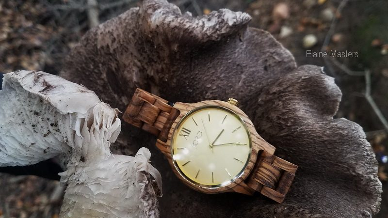 Wild growth mushroom and Jord Zebra wood watch
