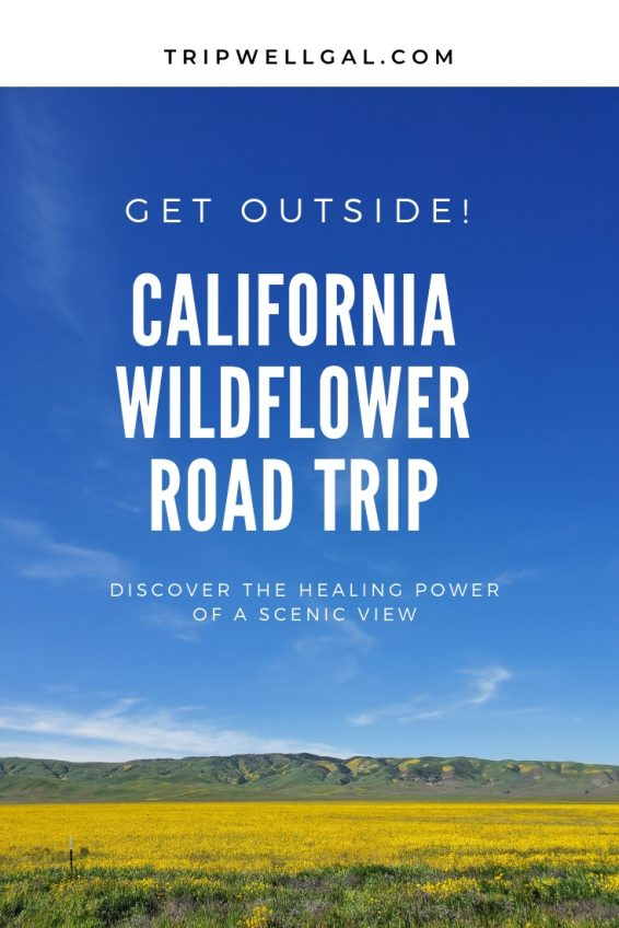 Scenic view on a wildflower road trip in California