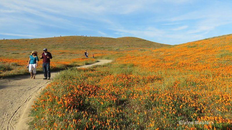 Trail inside the Antelope Valley Poppy Preserve