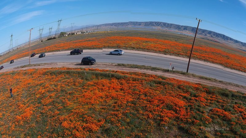 Drone shot of poppies on the road to the Antelope Valley Preserve