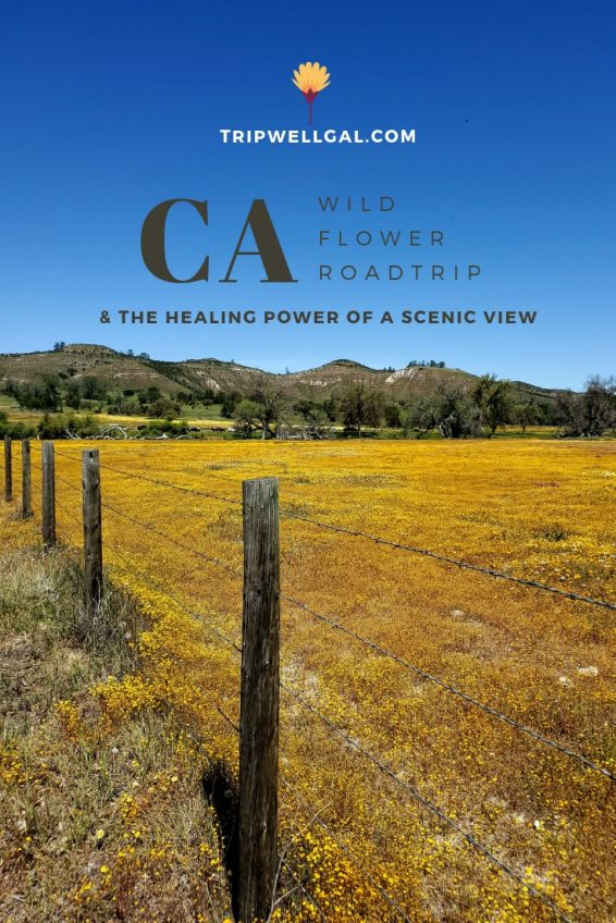 The healing power of a scenic view full of wildflowers on a California road trip