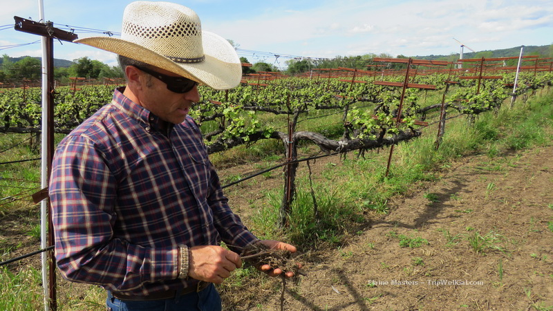 Quivira vineyard manager, Ned Horton