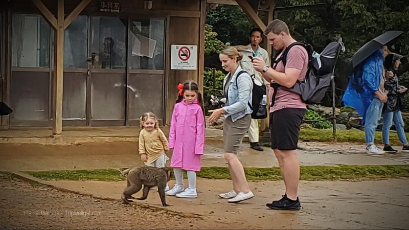 Japanese Macaque Monkeys at Kameyama-koen Park