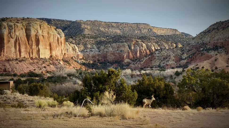 Box Canyon with Deer on one of the Ghost Ranch Hikes